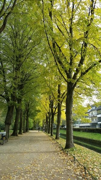 An einem sonnigeren Tag in der spätbarocken Seufzerallee parallel zur im Süden der Anlage kanalisierten Düssel.
